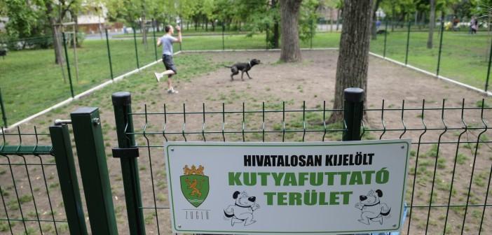 Chipleolvasó segít hazajuttatni az elkóborolt kutyákat