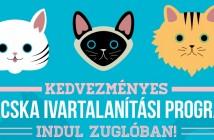 Kedvezményes macska ivartalanítási program indul Zuglóban