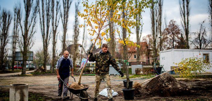 Új növényekkel pótolták a Mogyoródi úton kivágott fákat