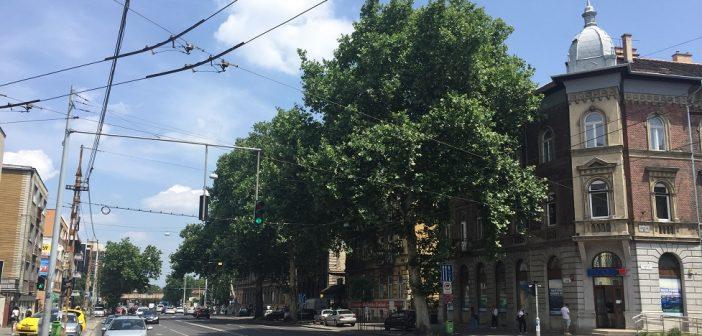 A főpolgármester Karácsony Gergely kérésére felfüggeszti a Thököly úti fák kivágásáról szóló döntés végrehajtását