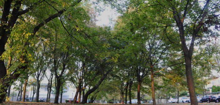 Több fasor is megújul a kerületben