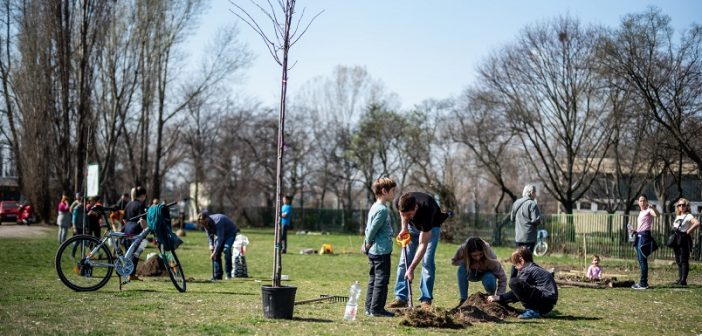 Közösségi összefogással bővült az ehető erdő