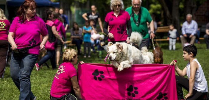 Idén három kutyafuttatónál lesz fejlesztés