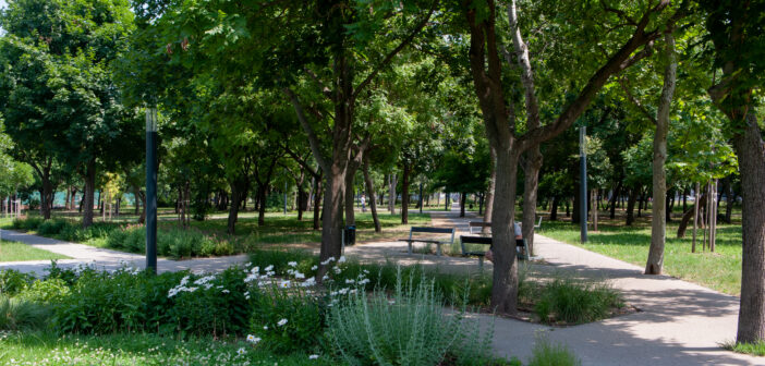 park illusztráció
